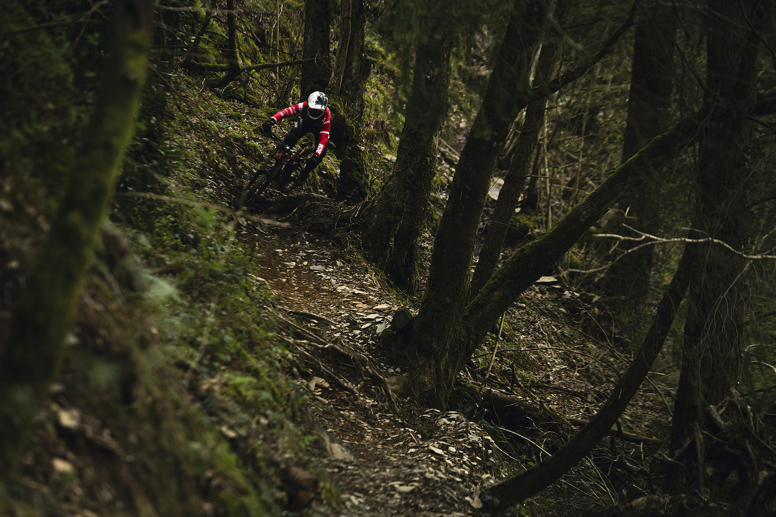 Steep loose and incredibly well crafted trail threads between the dark woodlands lower down the mountain side.
