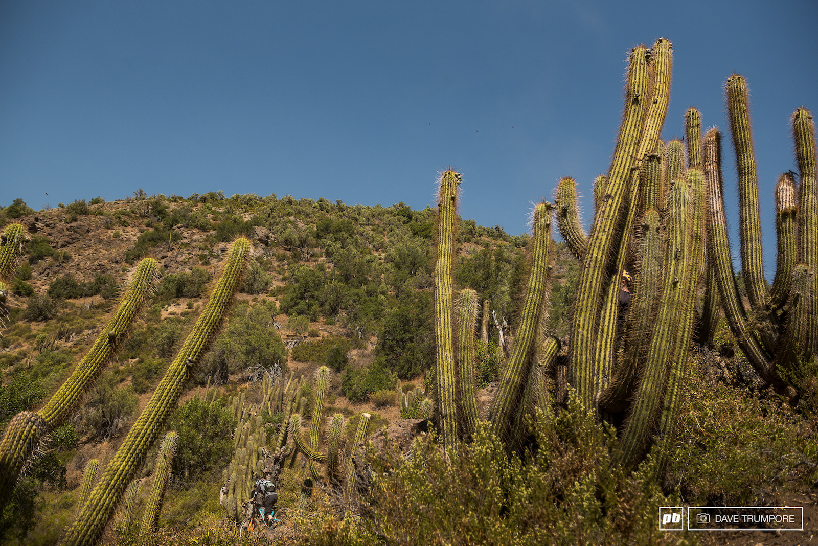 Jesse Melamed gets dwarfed by some massive cactus on Stage 2.