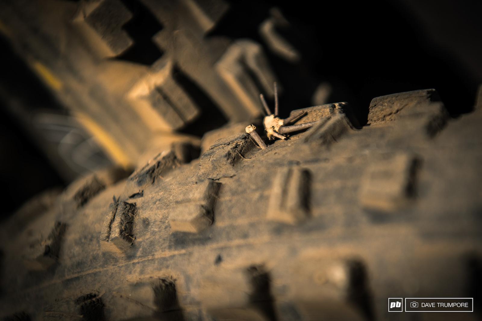 Tire vs. cactus