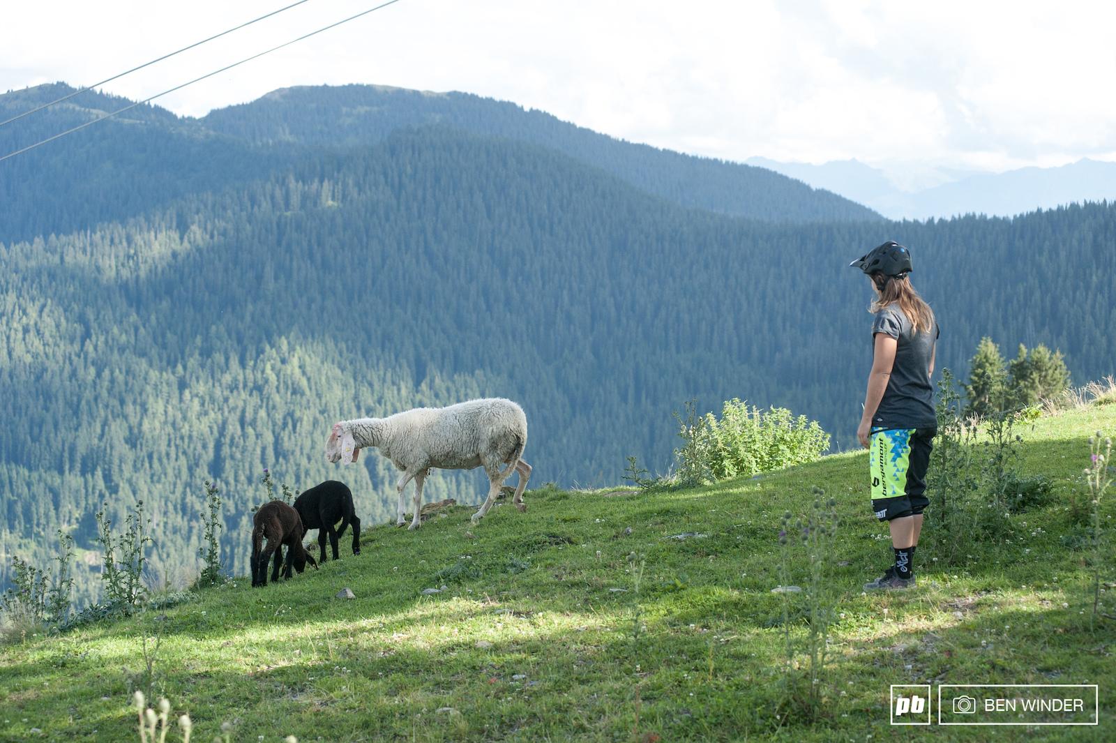 Morgane sheepishly approaching wild mountain animals.