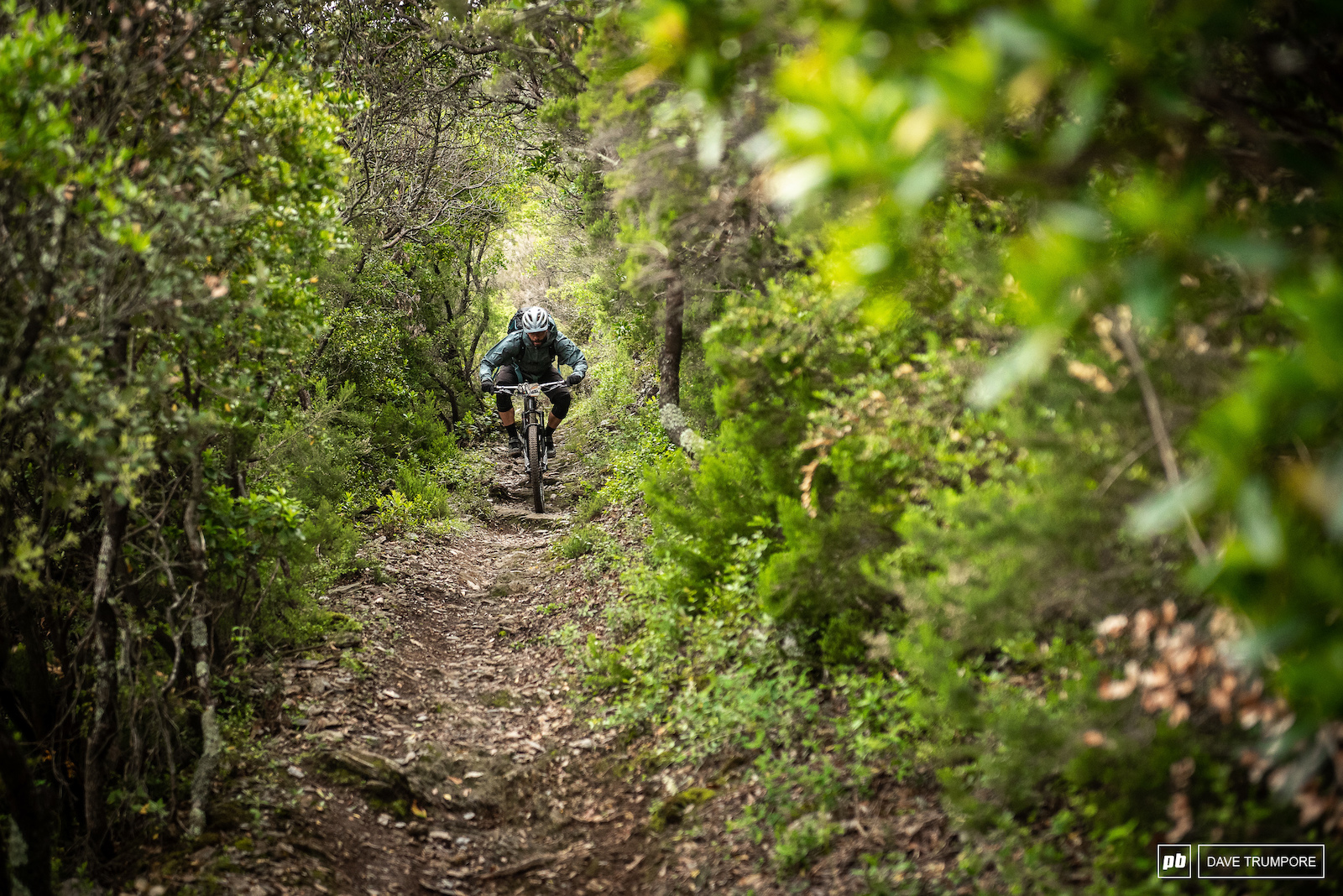 Matt Delorme descends through a tunnel of trees on Stage 8.