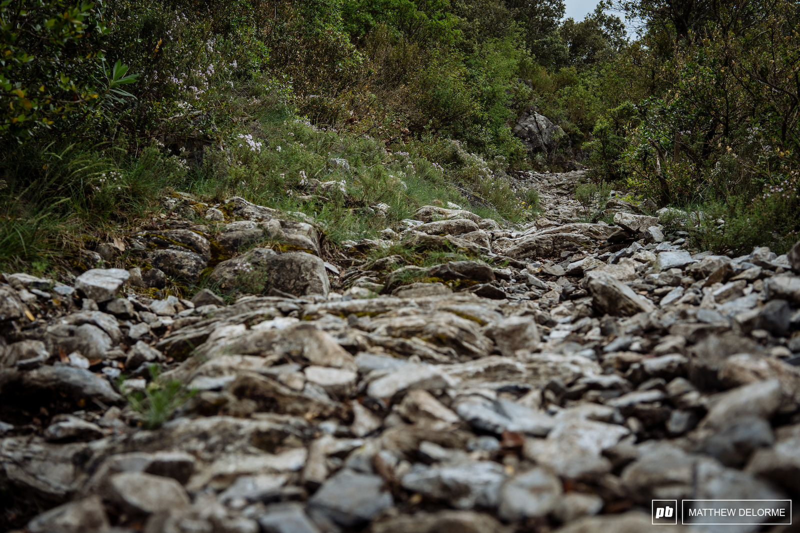There are some carbon killers littered about these trails.