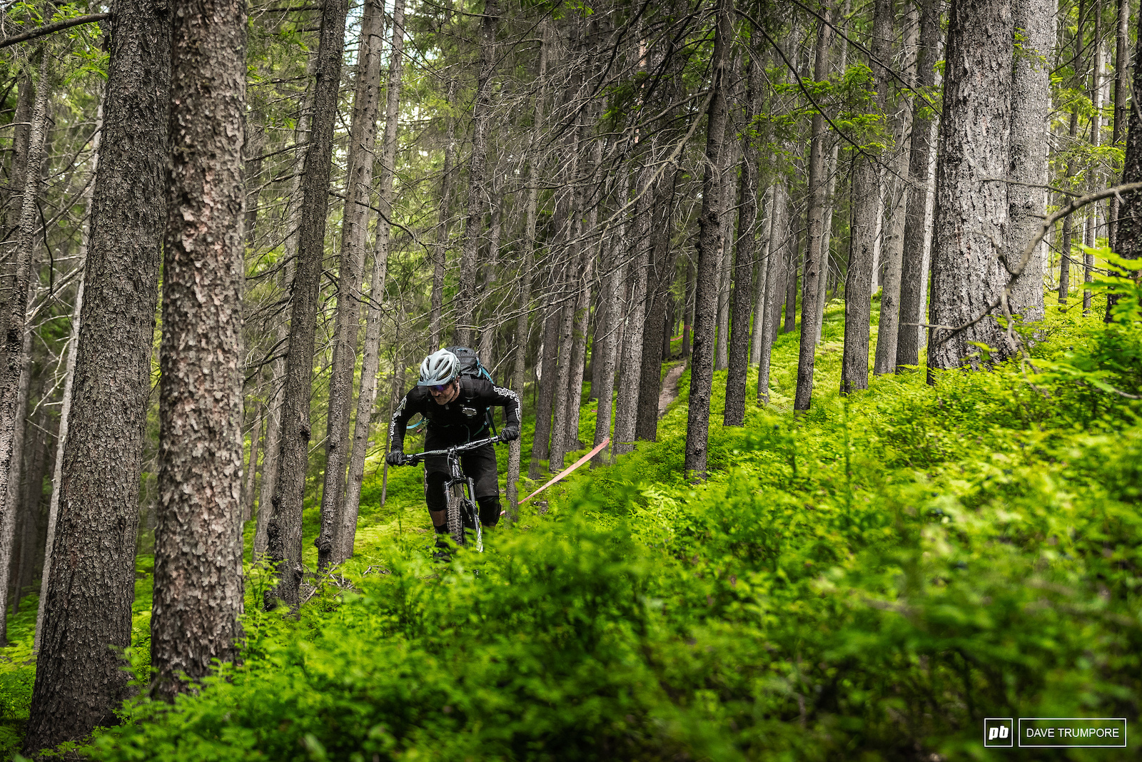 Lush ferns and tall trees make up the top of stage 4.