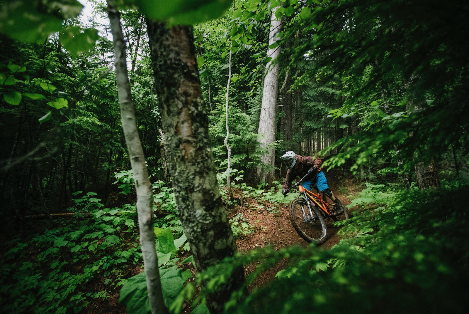Revelstoke has some beautiful lush forests. Go as fast as you can to take in as many smells as quickly as possible.