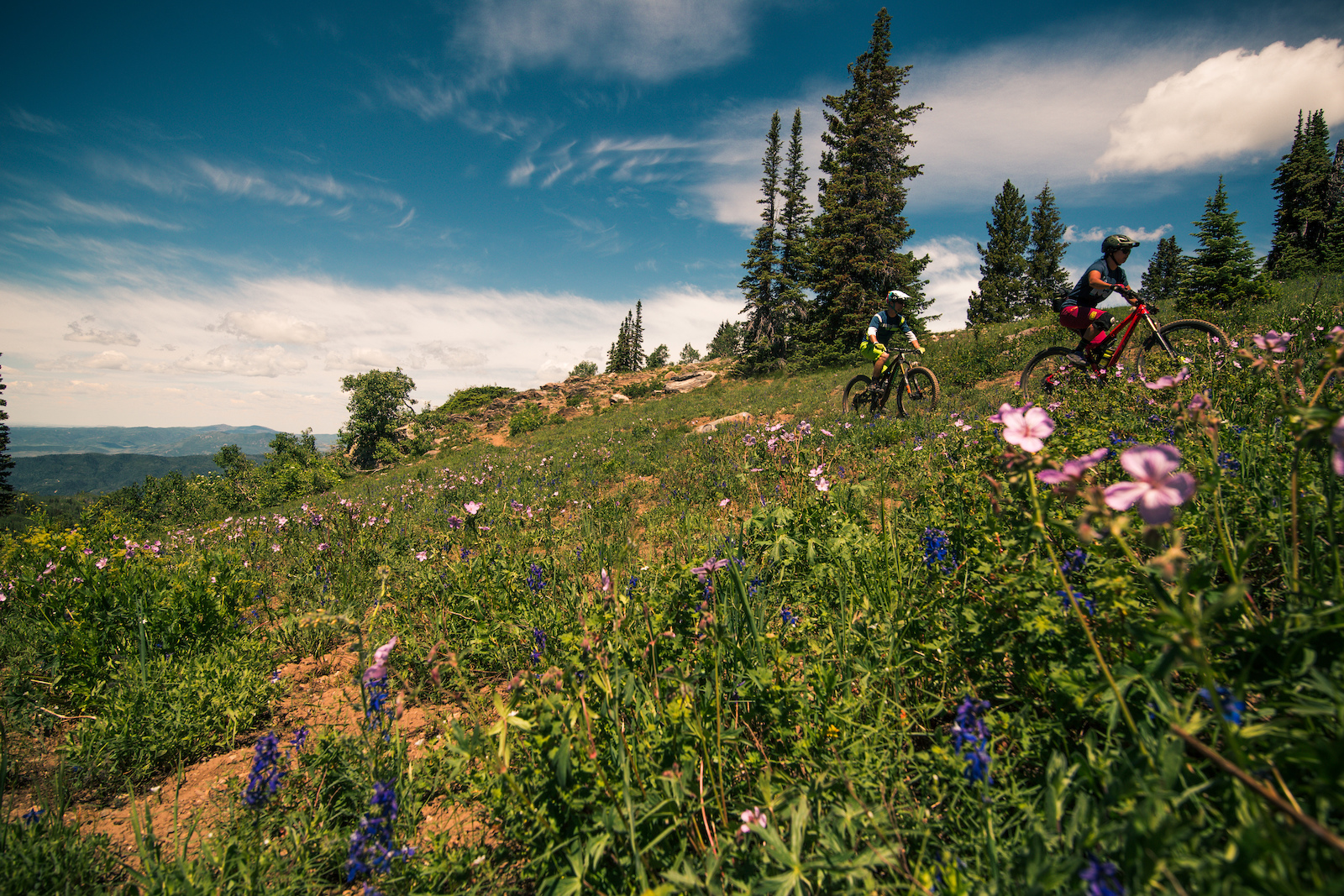 Fast singletrack was nothing short of common on Upper Bear Creek. I don t know if I was going crazy but I swear the rest of the trail smelled just like honey. As the wildflowers became more common the riding began to open up and get a lot dustier.
