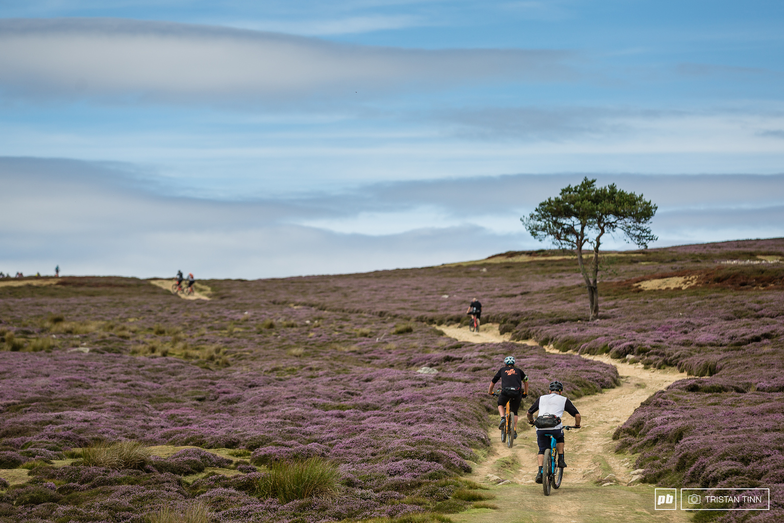 Blue skies purple heather and an yellow brick road