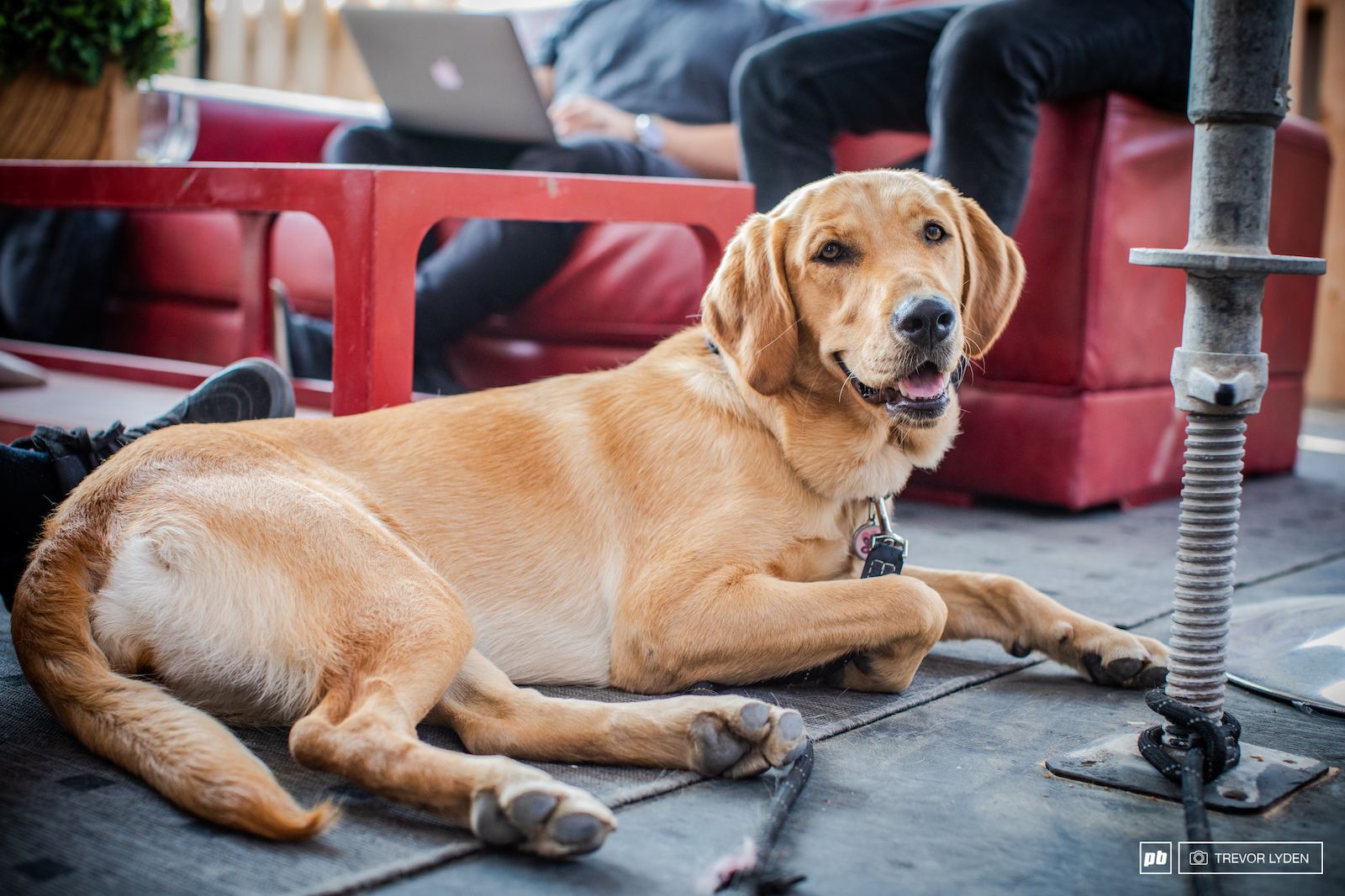 Name Luna Breed Lab Retriever Age 10 months Hometown North Shore BC Fun Fact Luna came from a breeder in the interior and wasn t used to the wet conditions of the shore. It took her a while get over her fear of water and the rain. Luna also happens to be Wade Simmons family dog.