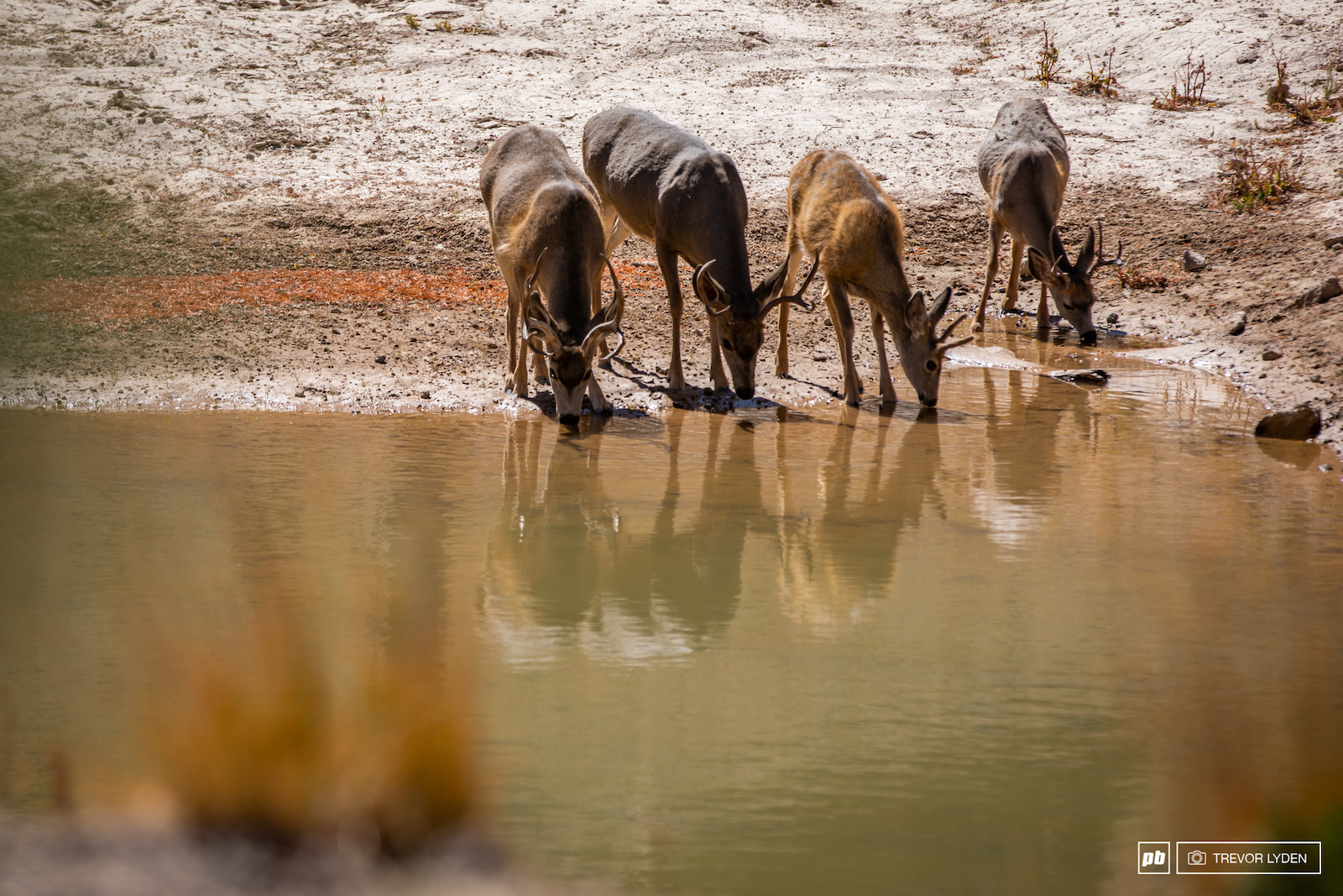 The wildlife of Mammoth Mountain
