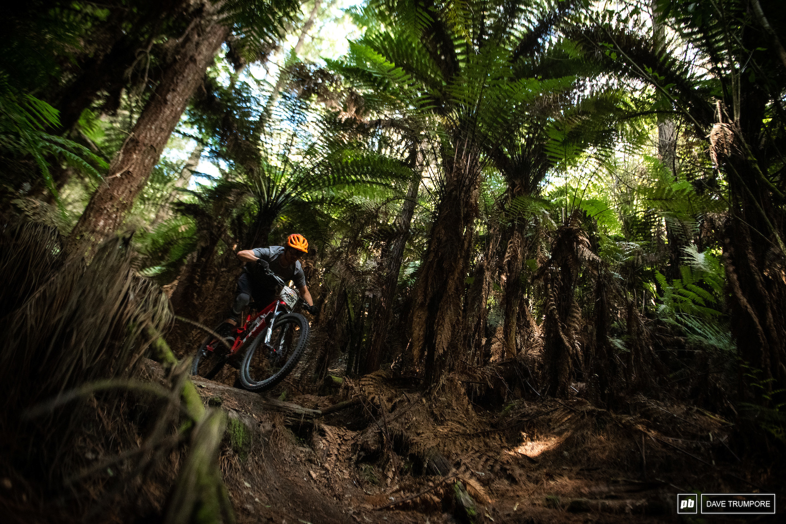 Dropping through the forest on stage 4.