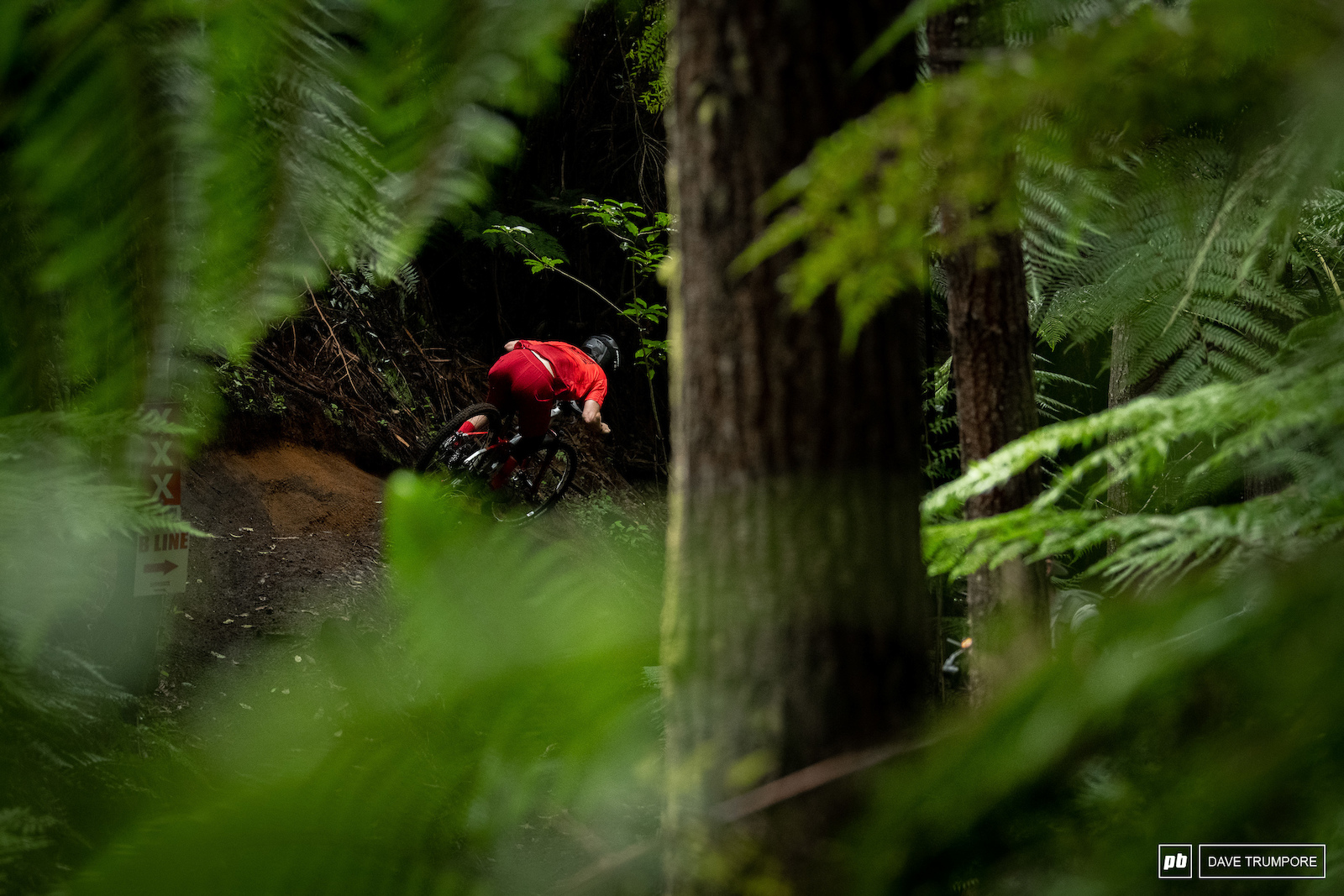 Keegan Wright was just a blur of red through the greenery of the forest.