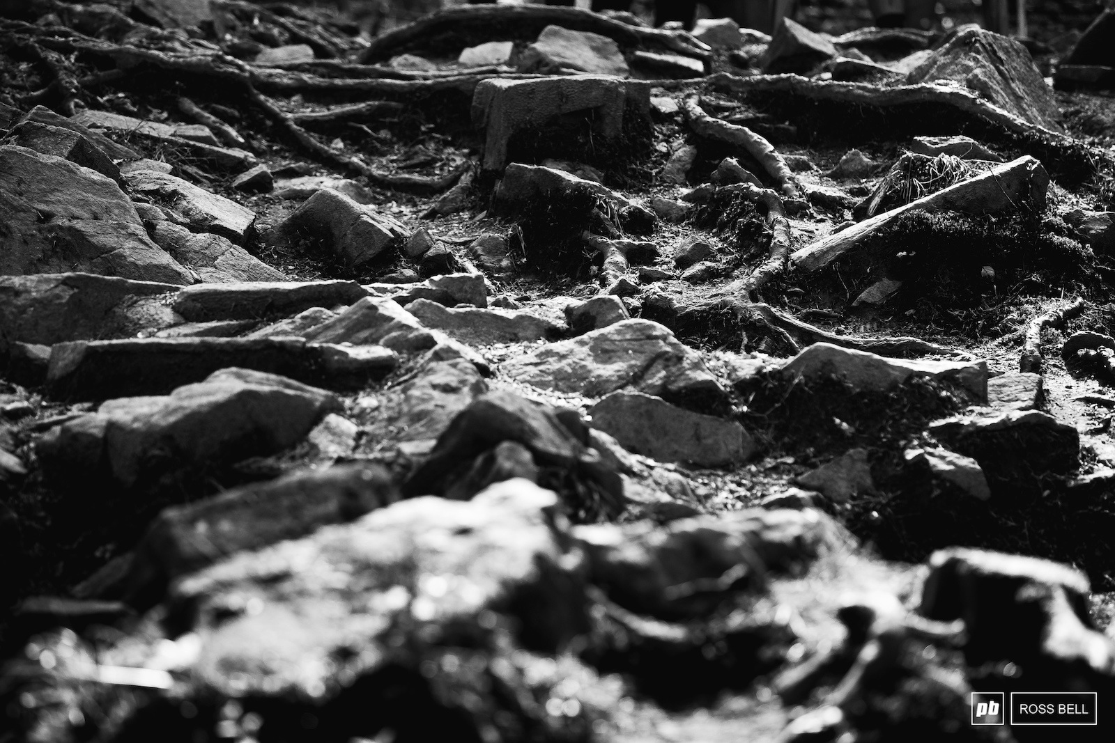 A minefield of roots and rocks ready to wreck rims and tires.