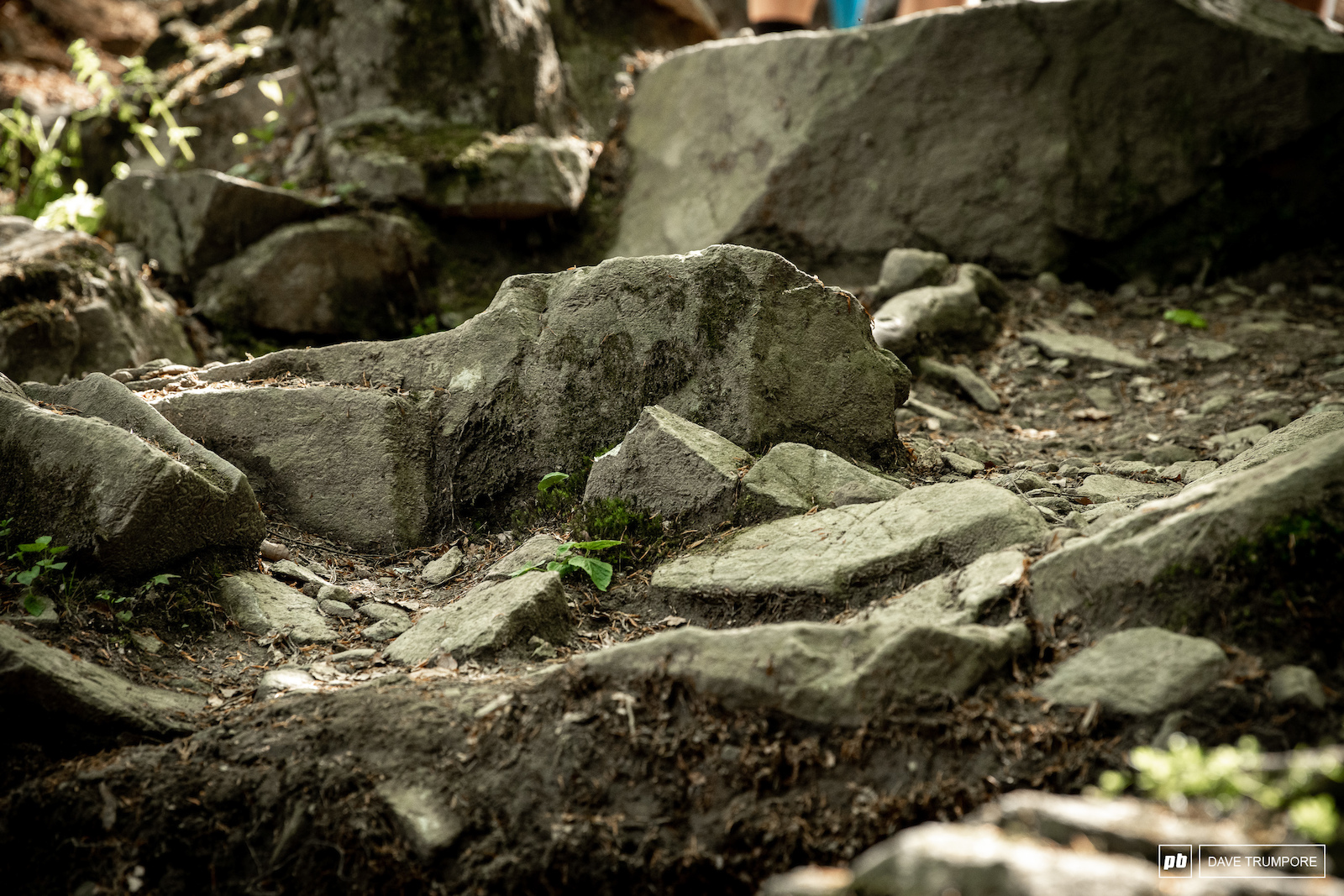 A close up of the infamous Maribor rock garden.