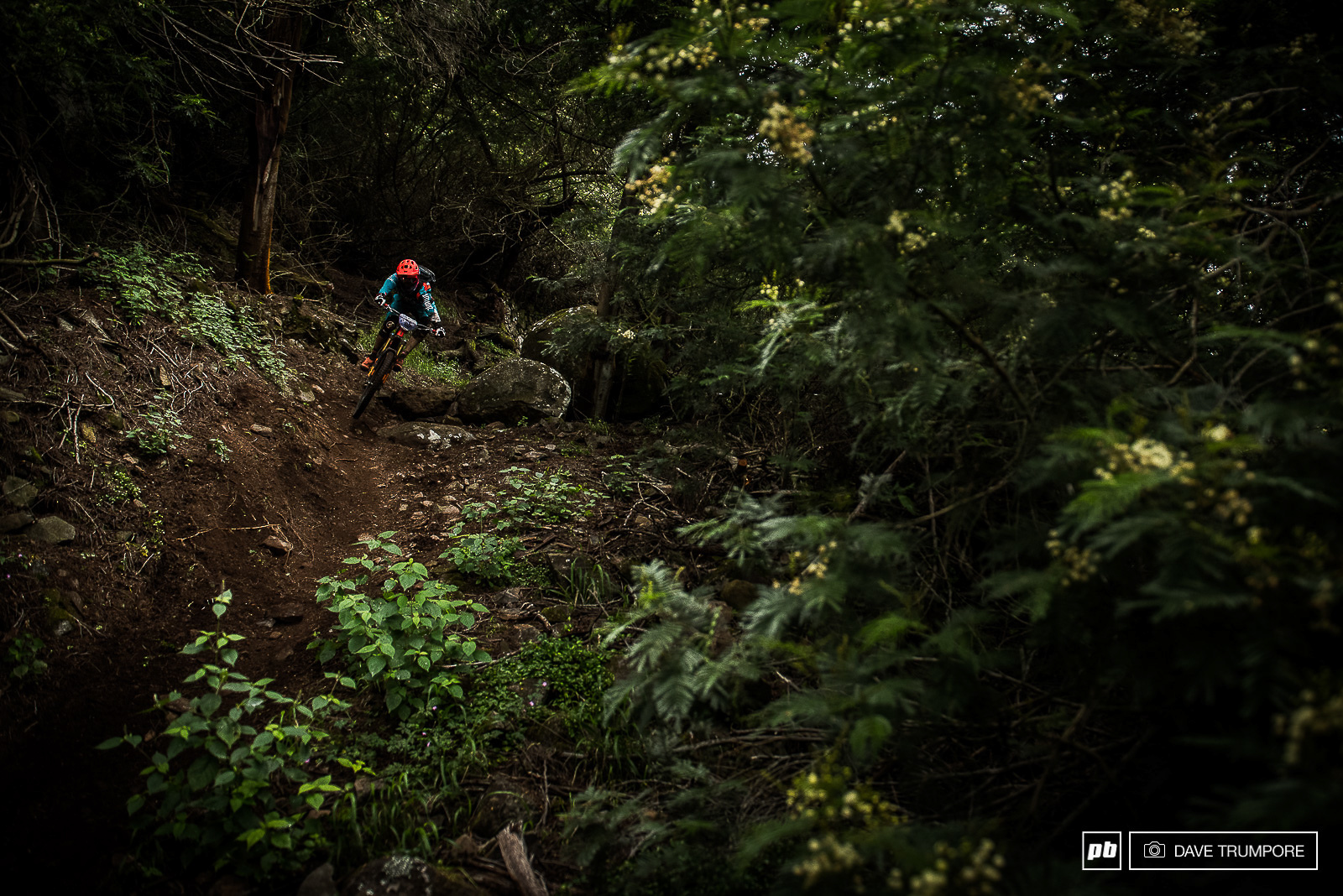 Ludo May through some lush Madeira forest back in 2017 when the EWS first came to Madeira