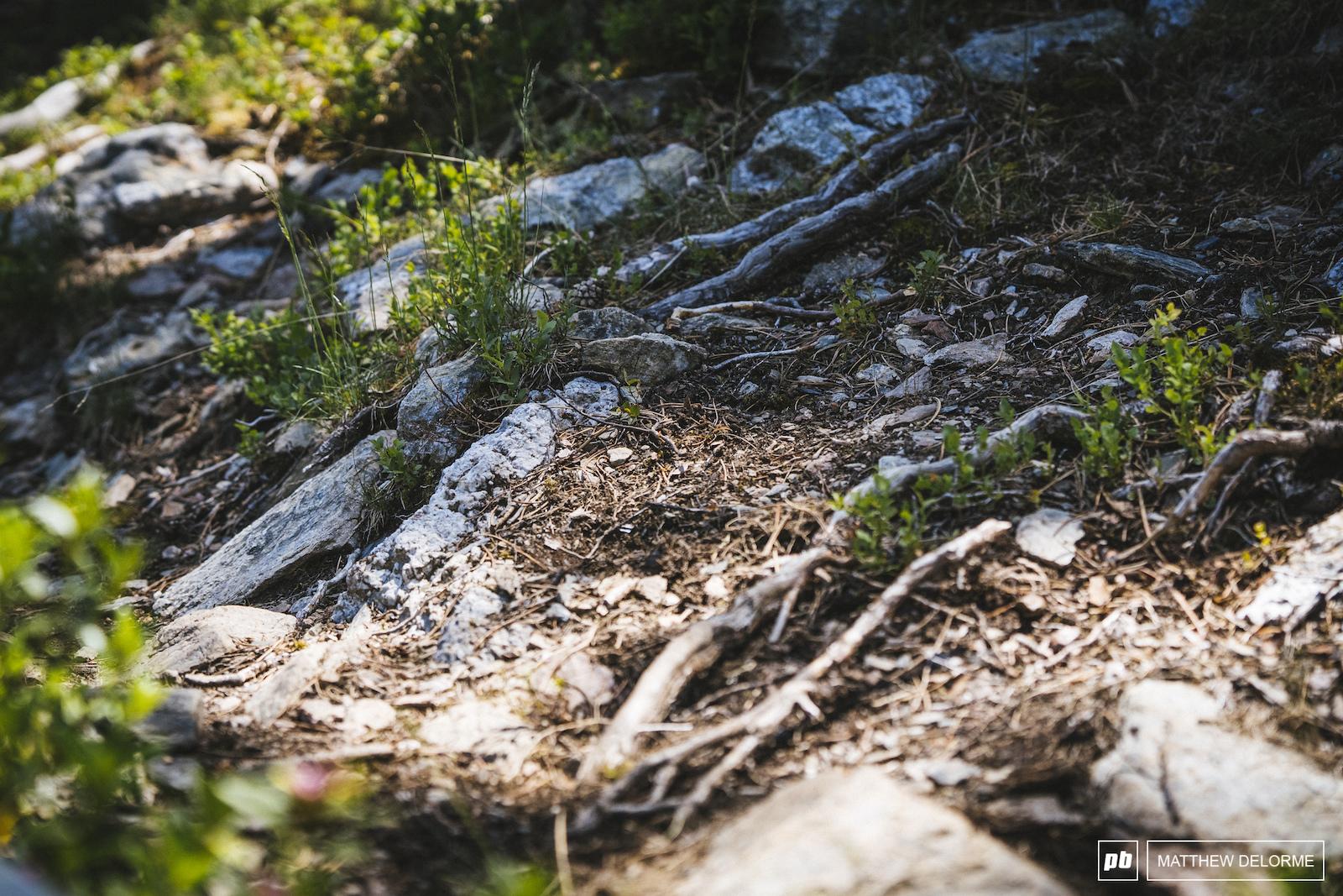 Plenty of rocks and roots to go around.