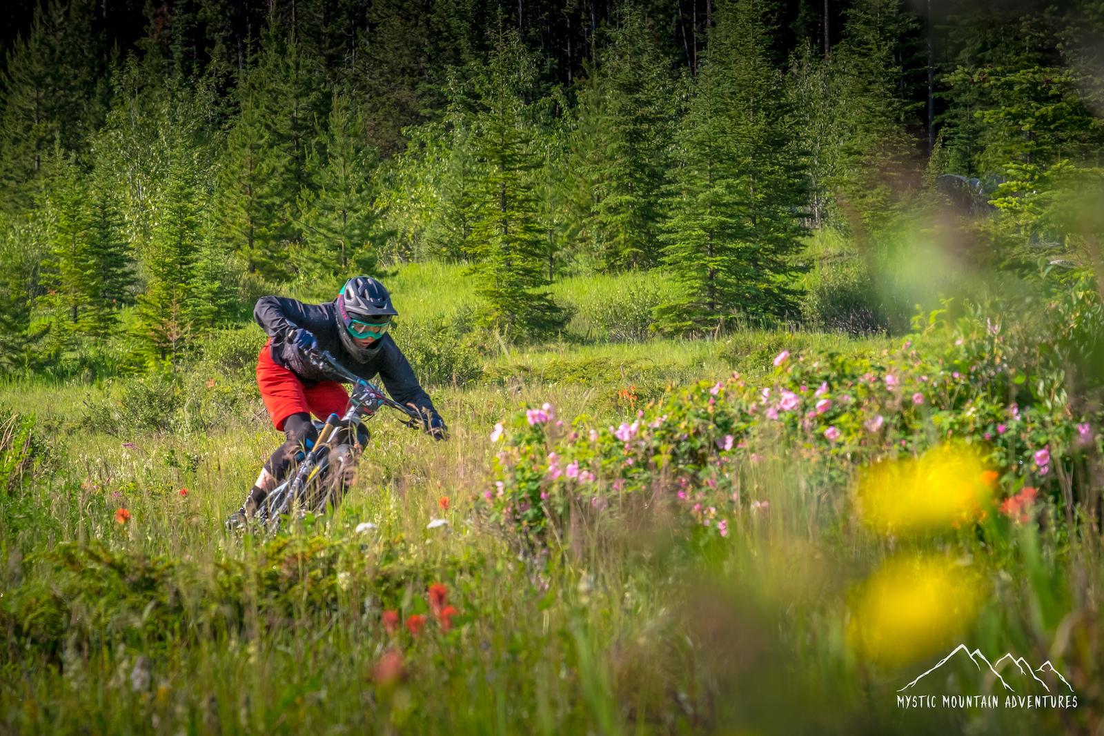 2019 Canmore BC Enduro | Steedz Enduro | Bicycle Cafe Canmore | mysticmountainadventures.com