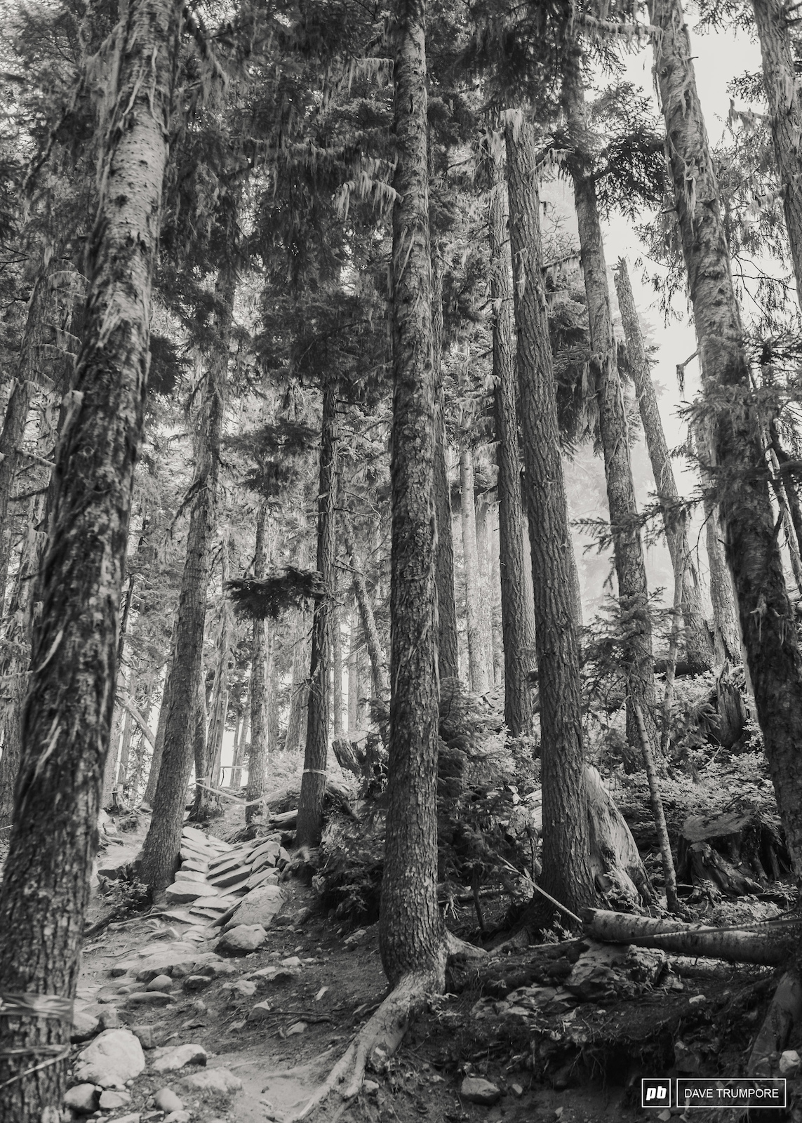 Whistler is busting out the classics for this years EWS round with Stage 6 doing down In Deep and this section of No Joke being used for Stage 4