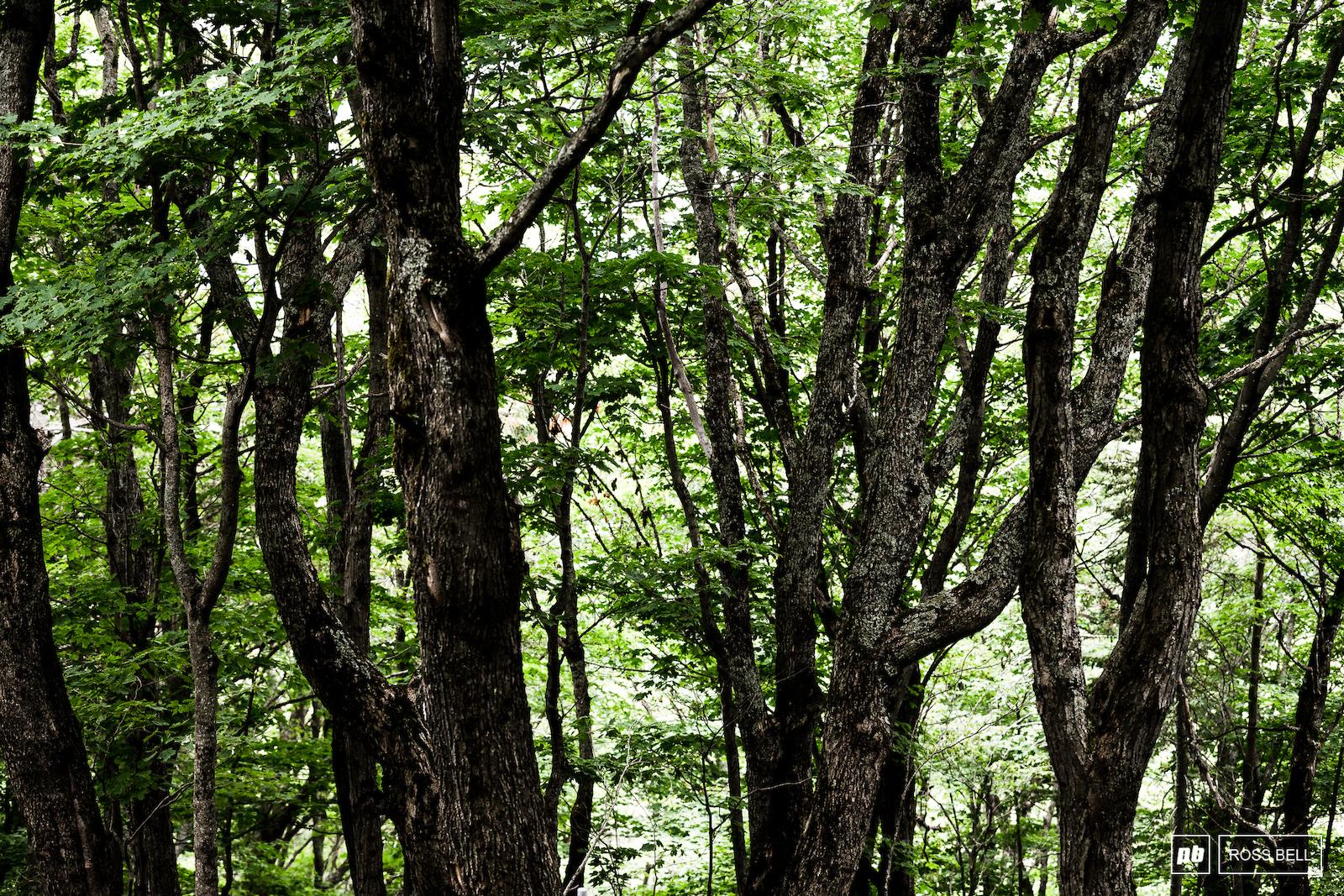 The quaint woods of Quebec.