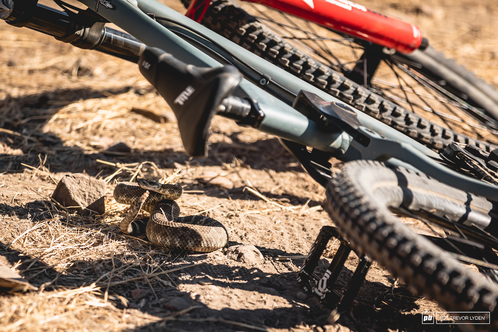 This rattlesnake was getting pumped watching everyone ride and wanted to take Tom s bike out for a spin.