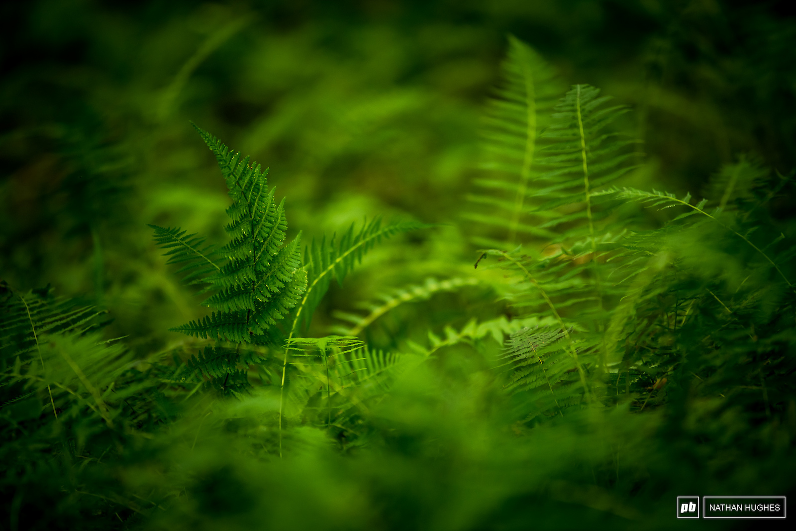 Deep ferny WV forest.