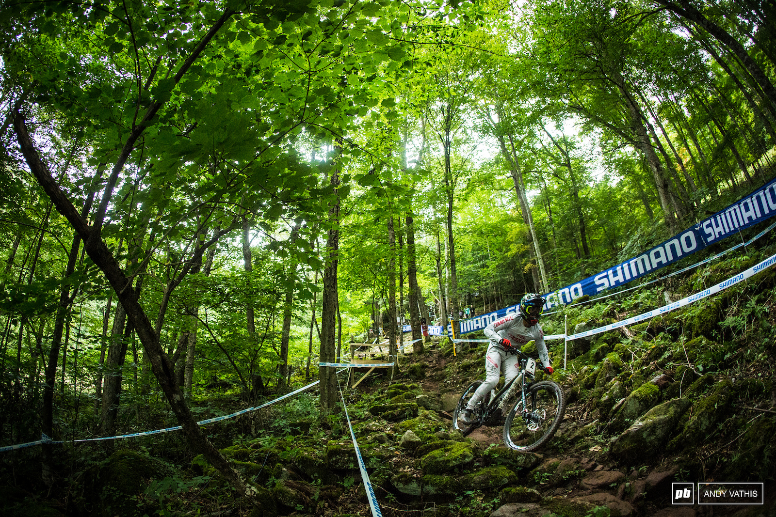 Amaury Pierron deep in the foliage. Hopefully for him the split times stay just as green.