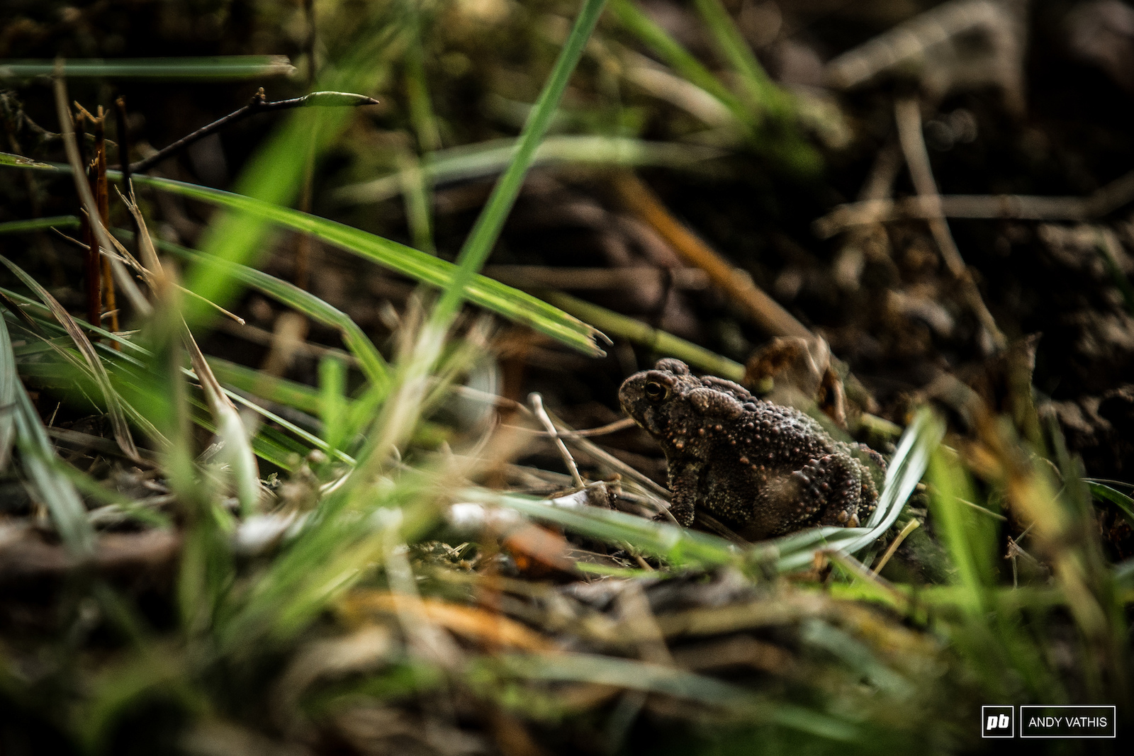 The toads came out to see what all the fuss is about in their neck of the woods.