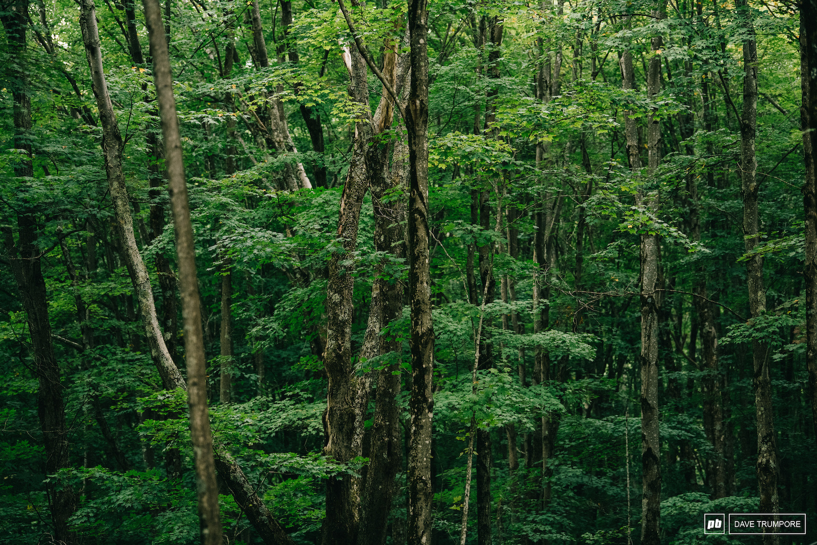 The thick forest here in West Virgina may look peaceful but today it was anything but as racfers battled it out for World Cup titles