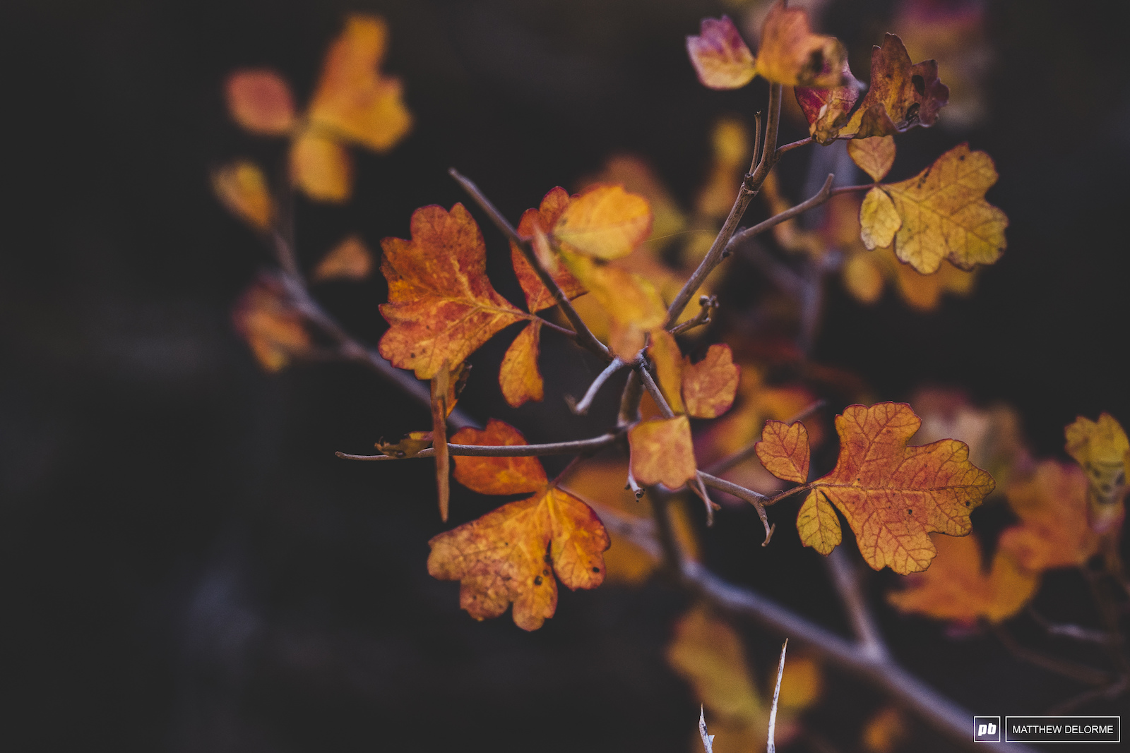 Textures of fall in the desert.