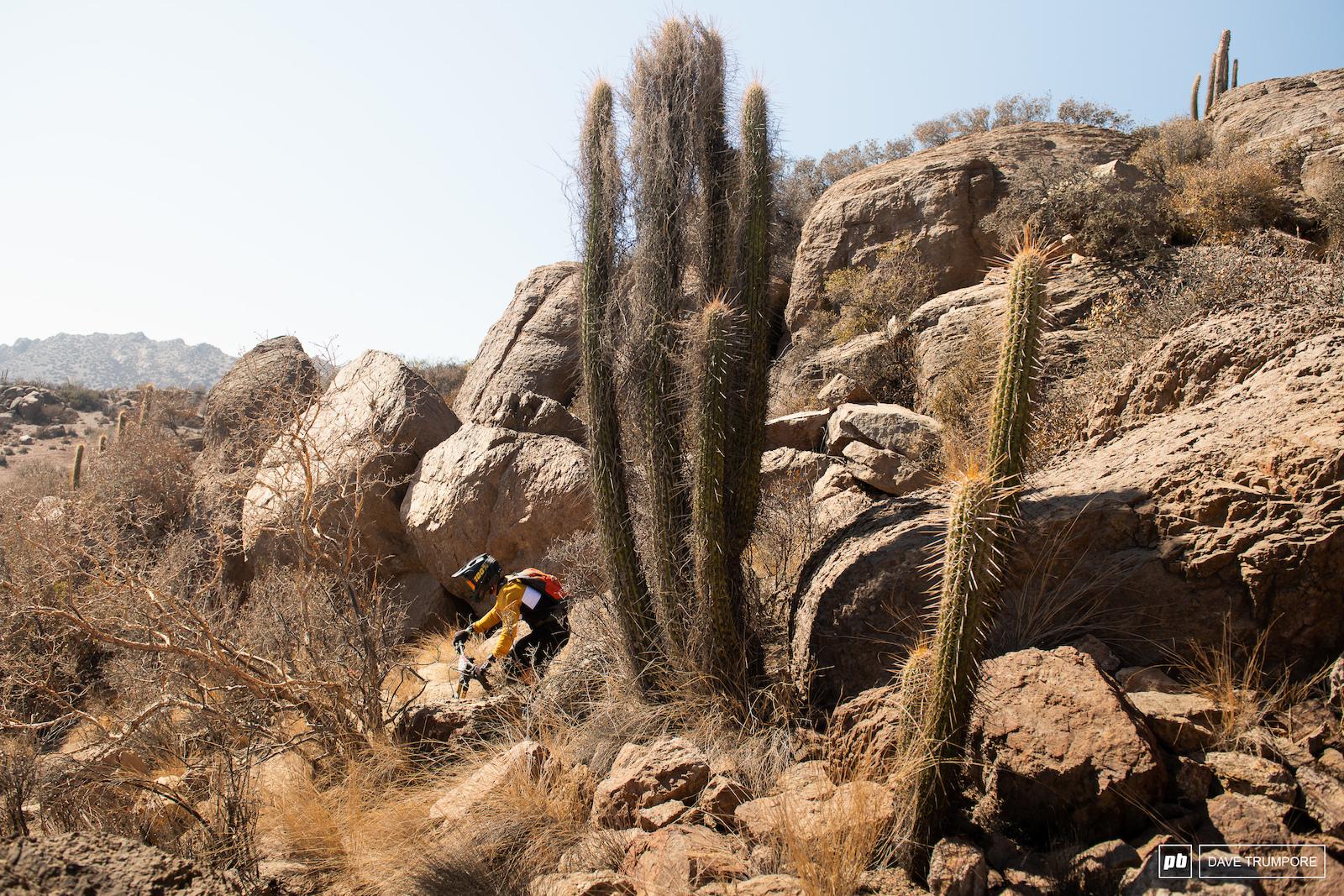 Big cactus... little rider