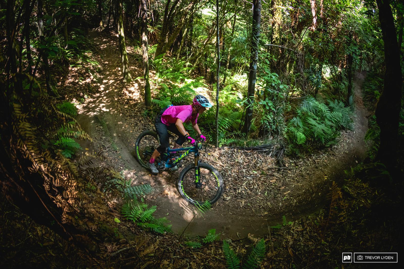Classic Rotorua deep woods.