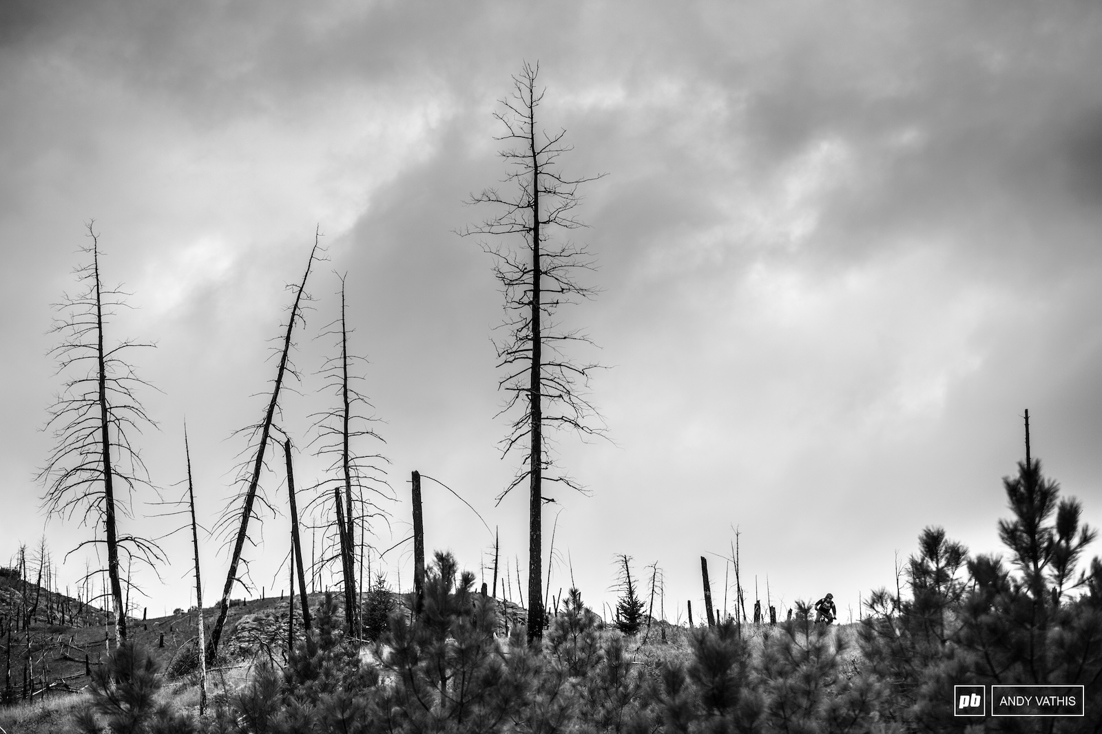 Evidence from the devastating 2017 fires that ravaged the Kamloops countryside is still visible while the surrounding vegetation slowly gets back on its feet.