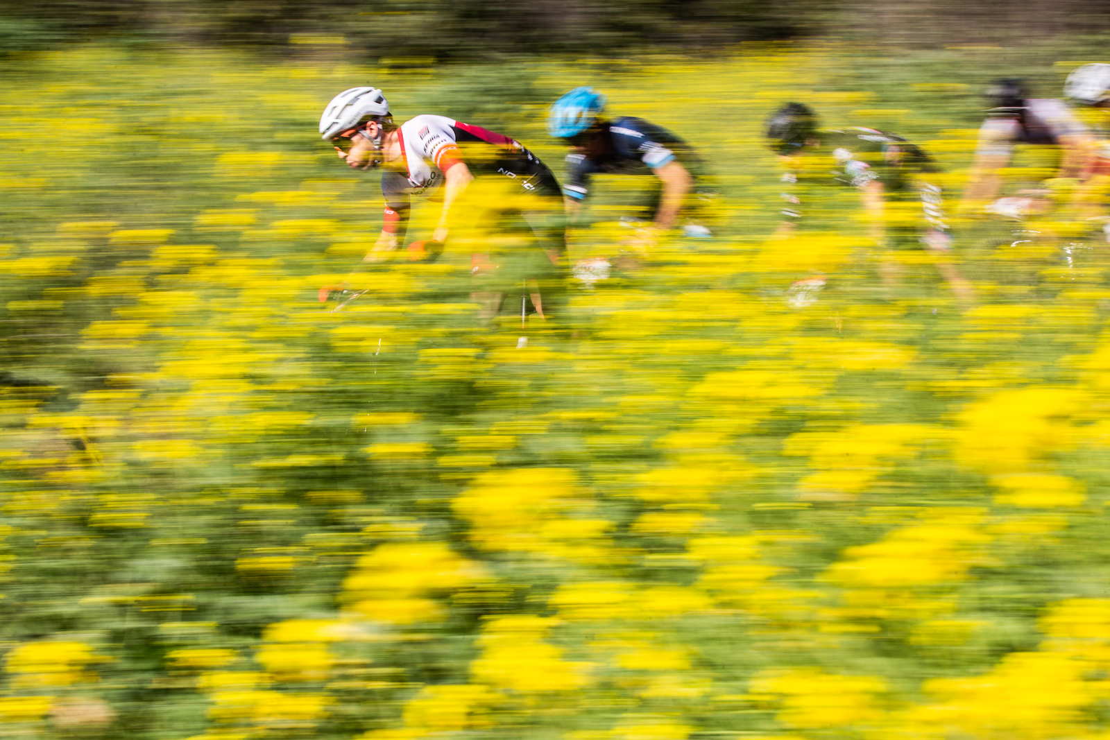 Peter Disera leading the charge through the flowers in California