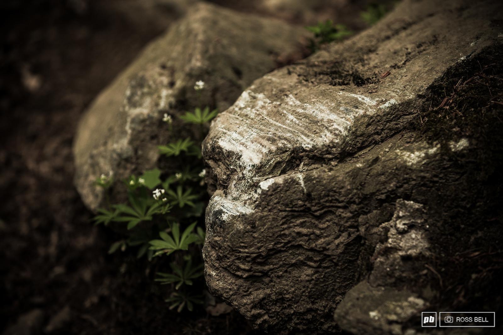 The rock garden has claimed many victims.
