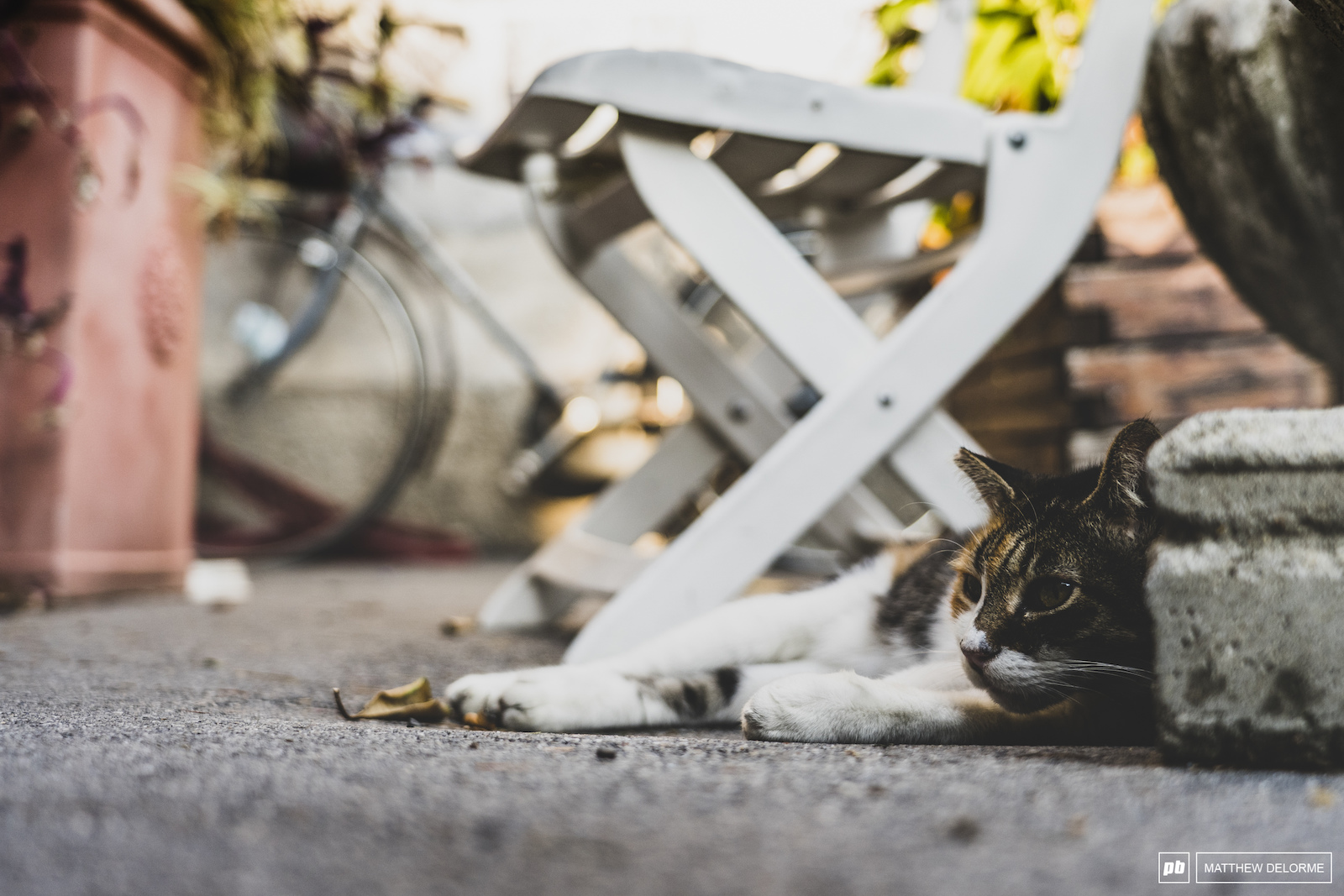 Just a lil old street kitty.