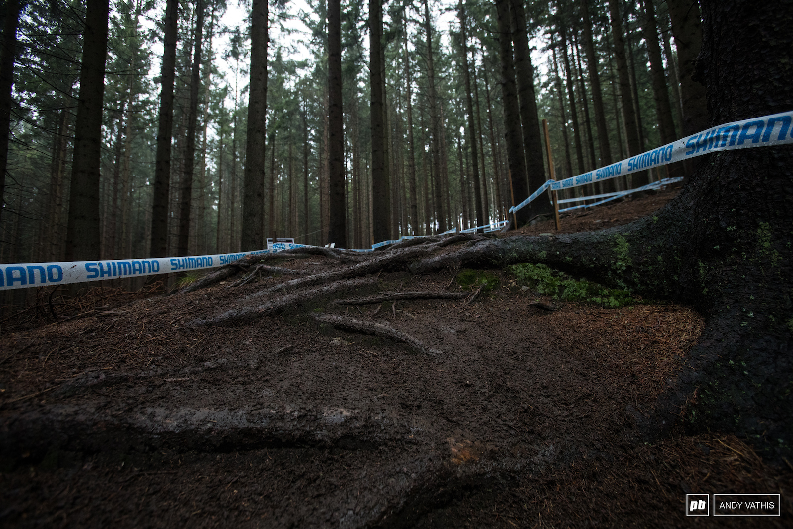 The roots are out to claim pedals and chainrings if you re not careful.