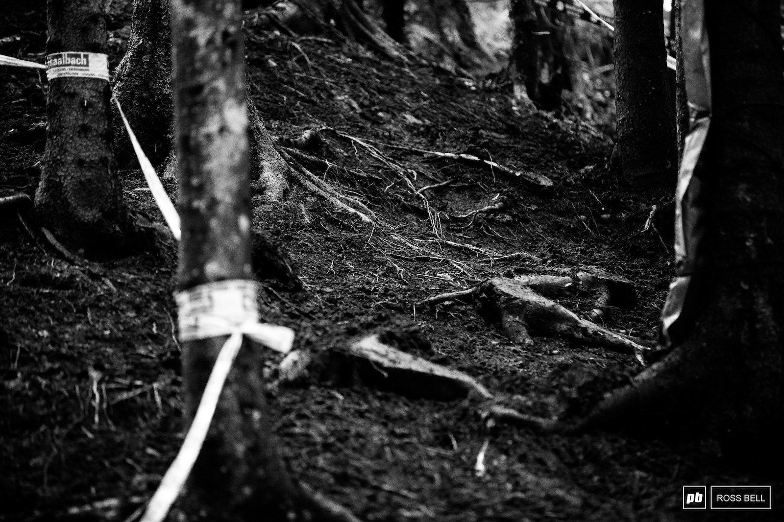 The roots are becoming more and more apparent with each passing wheel.