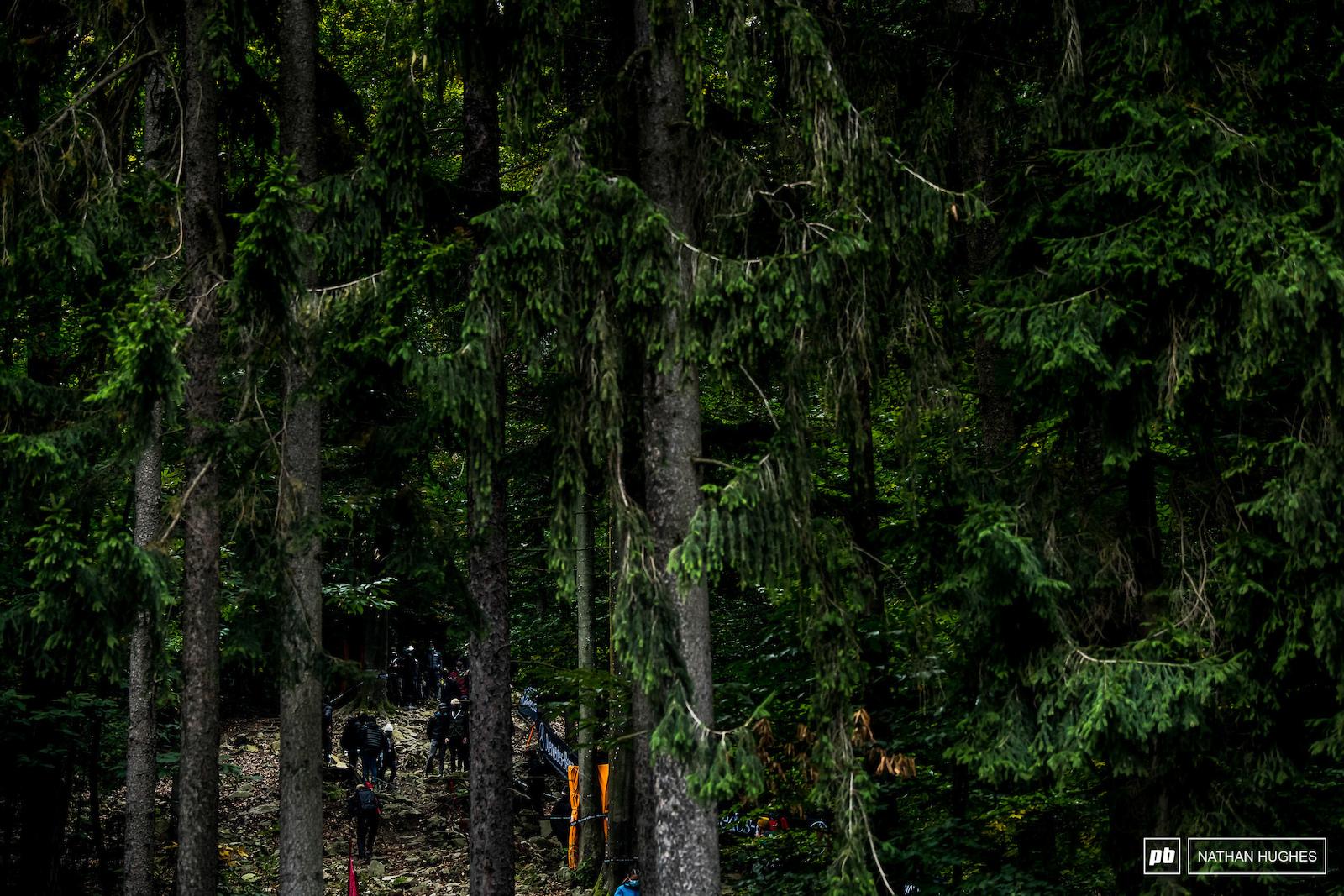 The deep woods.