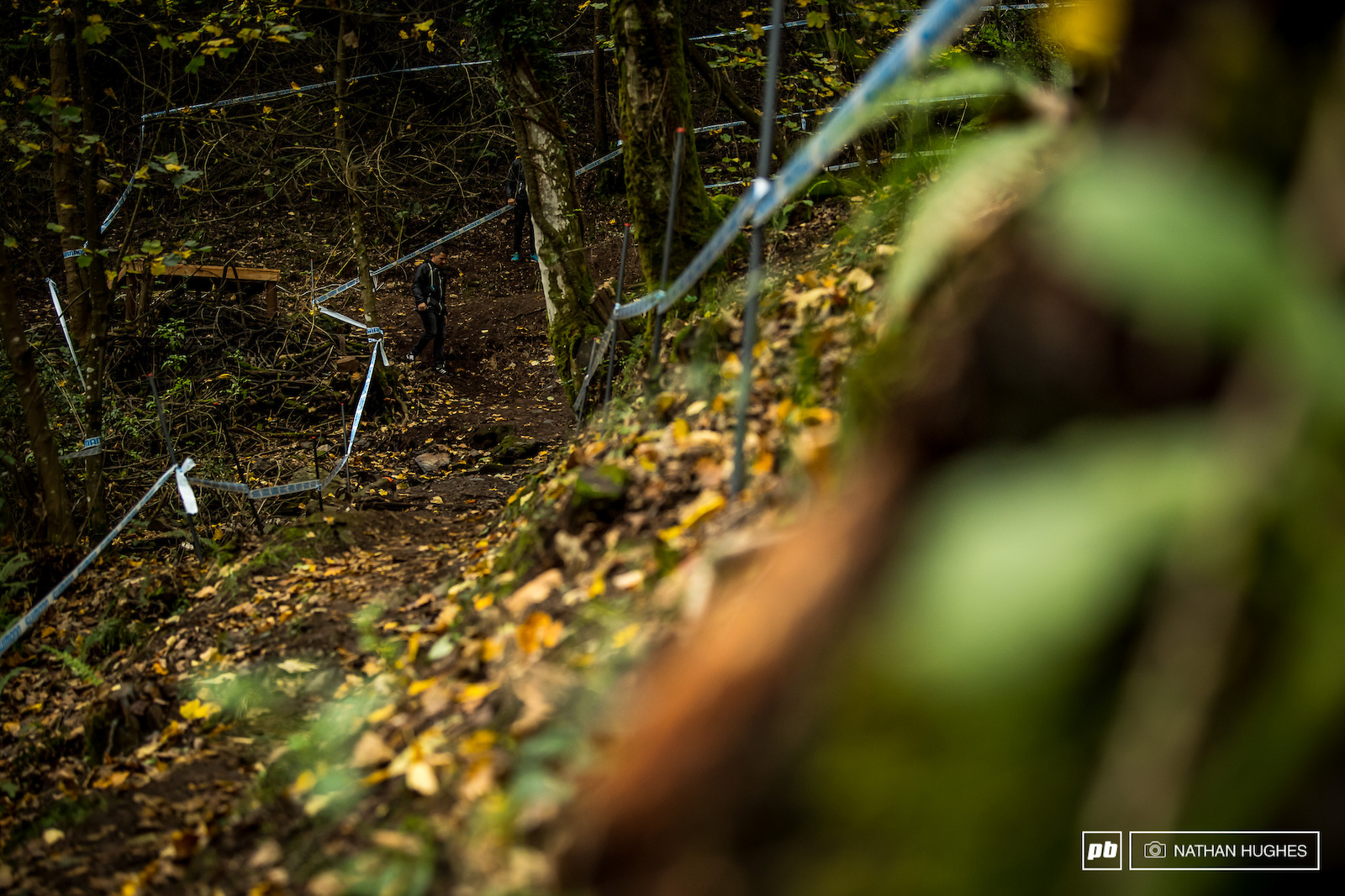 A little autumn section to wrap up the lower woods.