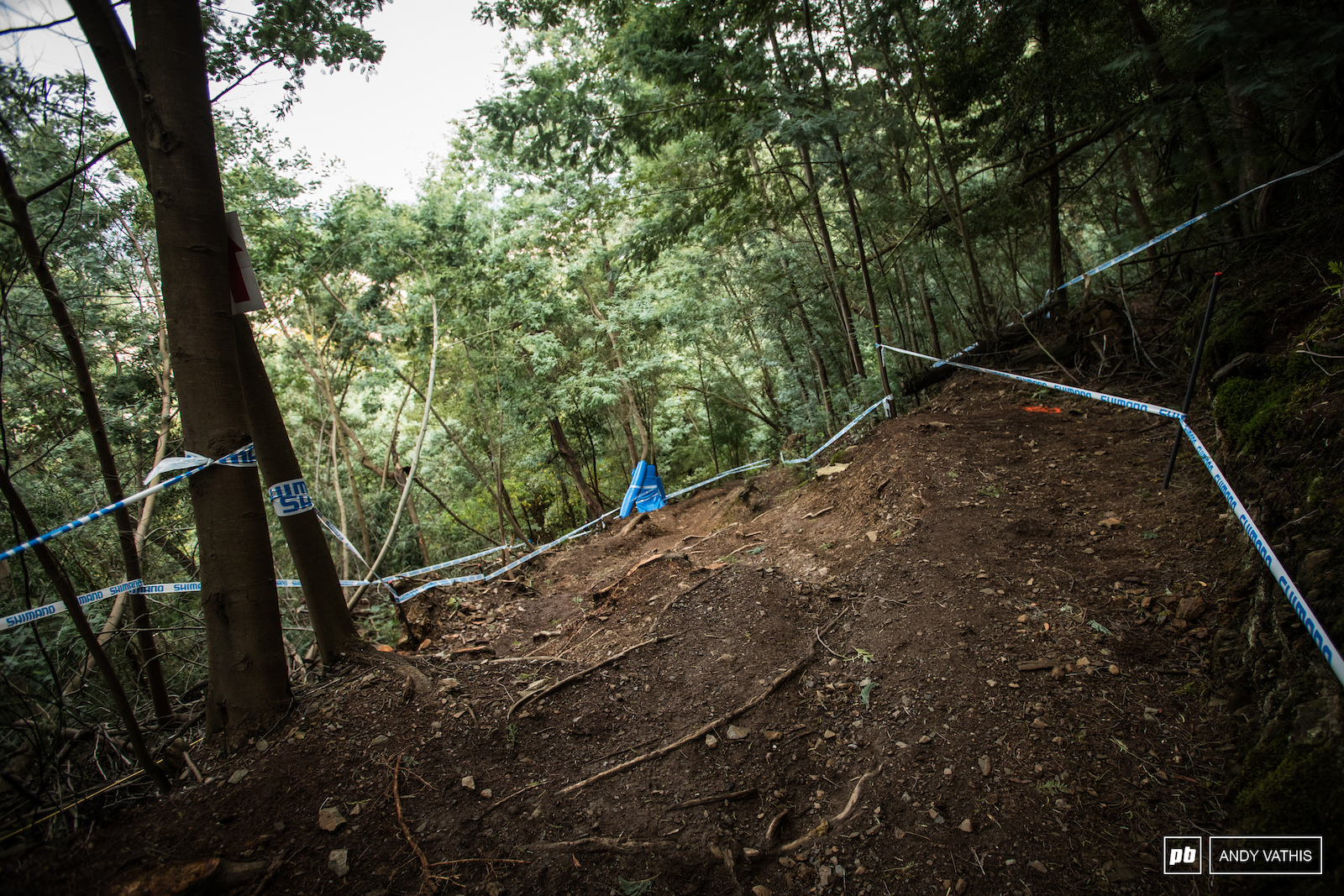 After a short break the track goes steep again for the last bit of woods.