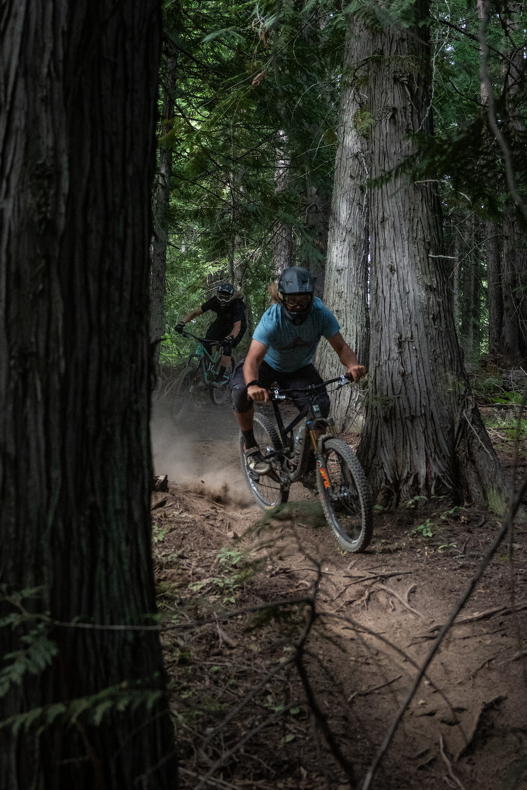 The cedar slalom course