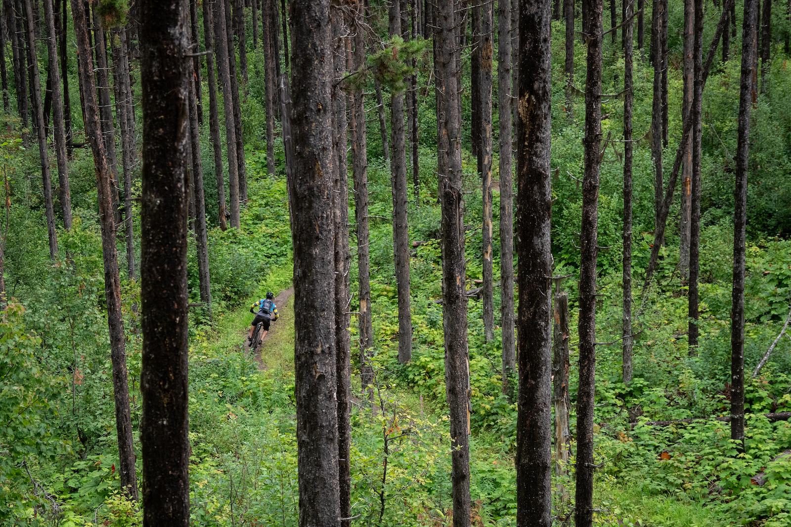Pine slalom course