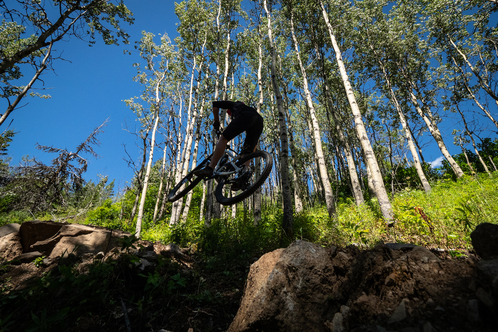 Hogzilla is the newest addition to Boer Mountain with 5km of A-Line style jumps drops and berms.