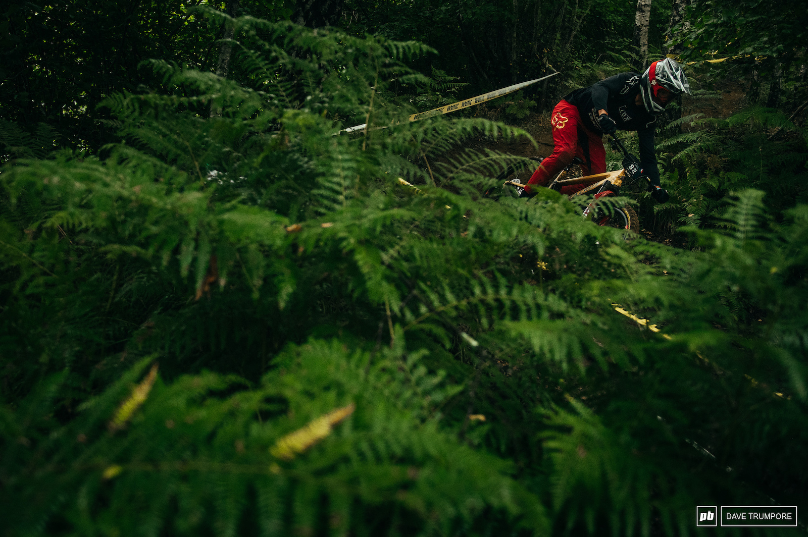 Stage 2 is in the forest amongst the ferns