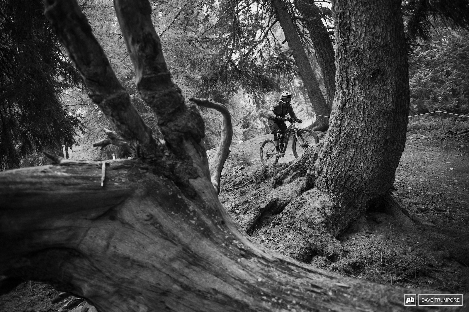 despite being high above treelike at the start all stages make their way through the forest here
