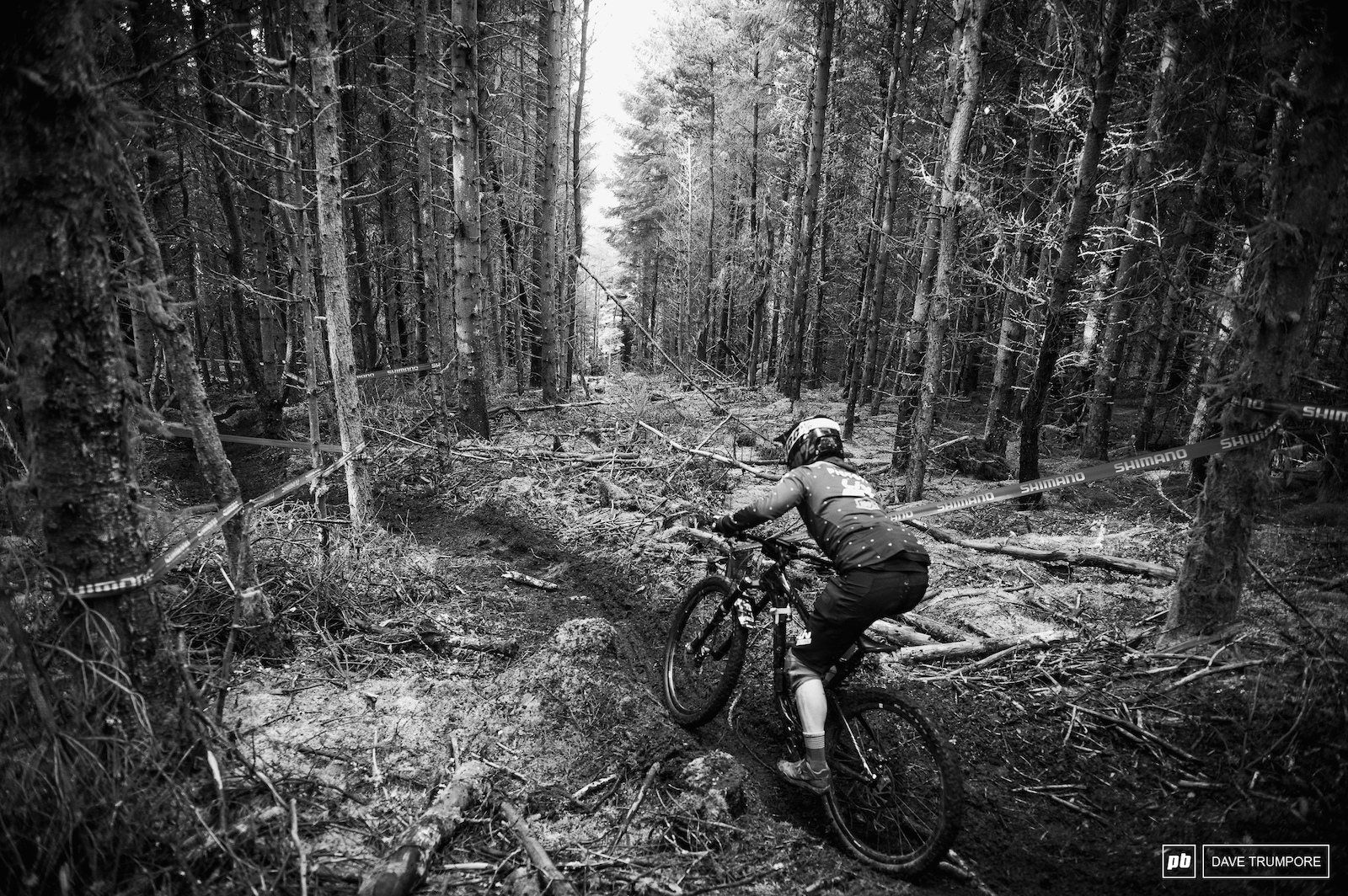 The open bits in the woods might be nice and bright but it makes seeing where you are going that much harder when you dive back into the darkness