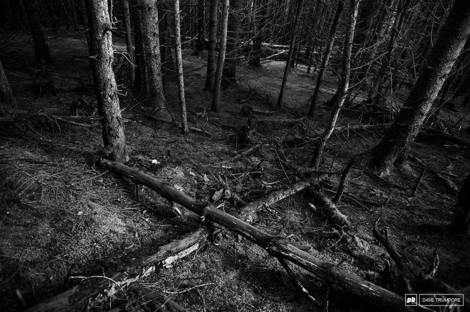 The woods are dark and the trees tight here in Scotland