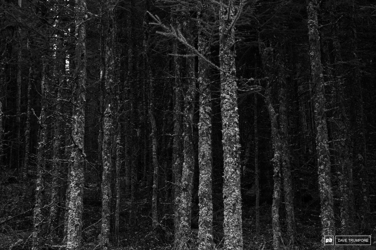Dark and moody Scottish woods