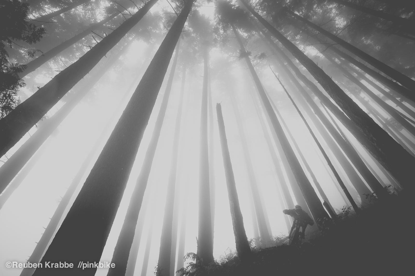 Stephen Matthews rides through foggy mordor like trees on sumas